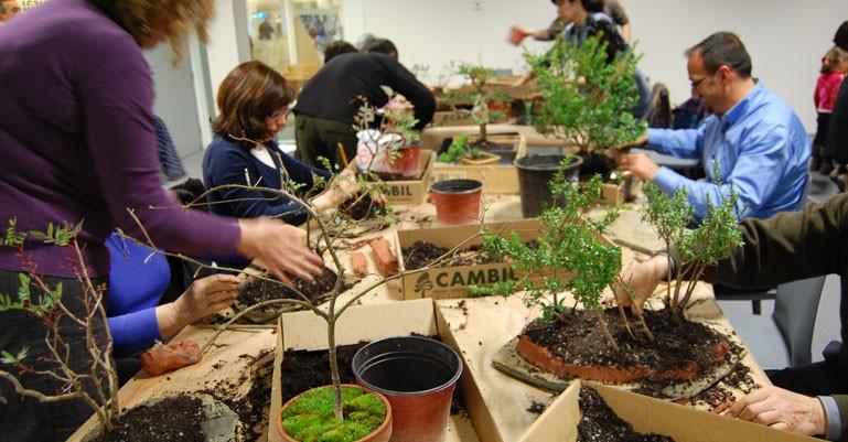Cuidados básicos del bonsái