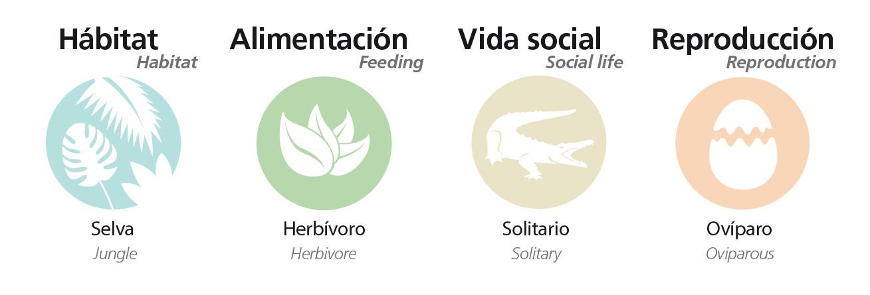 Información sobre Iguana verde
