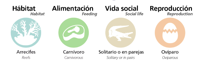 Información sobre Pez mariposa de nariz alargada