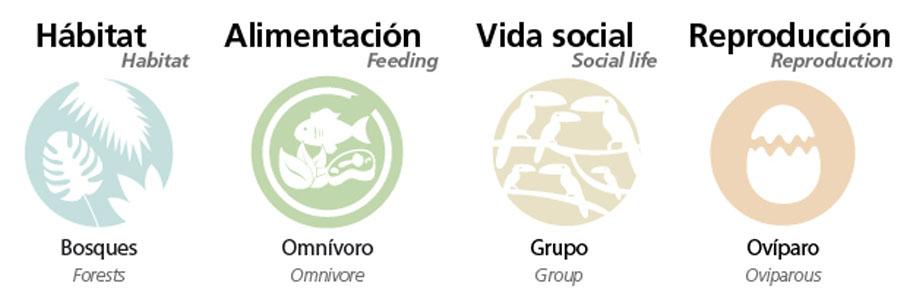 Información sobre Arasarí verde
