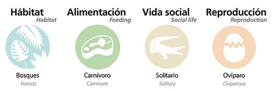 Información sobre Culebra verde nariguda